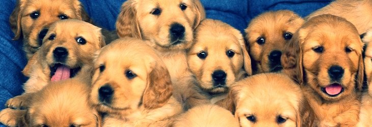 insurance information for pet stores in ohio